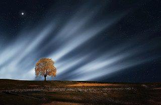 arbre-320x208